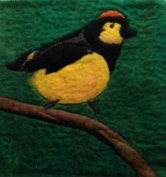 188. Costa rican bird
